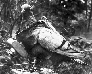 pigeon+war+homing+bird.jpg (400×322)